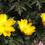 今日は啓蟄。春の訪れを感じる季節です。