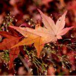 霜降そうこう、秋が深まって行きます。